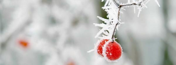 sentuntee_kuopion_energia_kaukolampo_koti_lammin_bioenergia_luontoystavallinen_energia_talvi_lumi_pihlaja_77