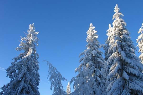 sentuntee_kuopion_energia_kaukolampo_lammin_bioenergia_luontoystavallinen_energia_talvi_lumi_112-1