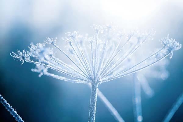 sentuntee_kuopion_energia_kaukolampo_lammin_bioenergia_luontoystavallinen_energia_talvi_lumi_89-1