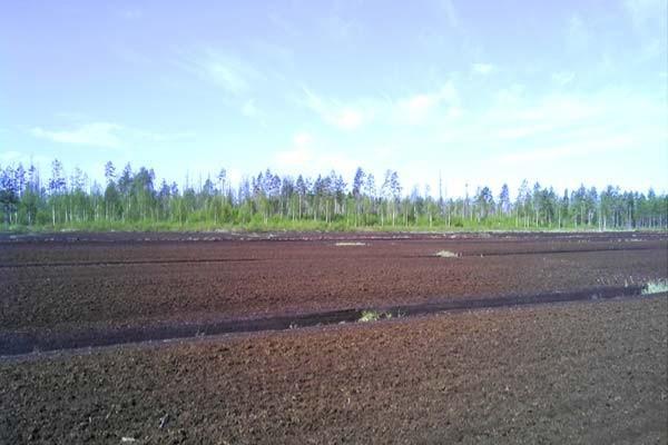 sentuntee_kuopion_energia_turve_turvetuotanto_luontoystavallinen_bioenergia_70-1