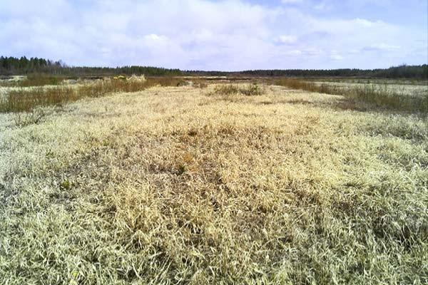 sentuntee_kuopion_energia_turve_turvetuotanto_luontoystavallinen_bioenergia_74-1