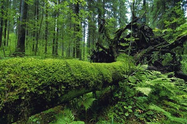 sentuntee_kuopion_energia_vihrea_puusahko_metsa_bioenergia_luontoystavallinen_energia_108-1